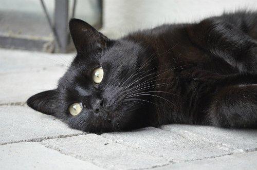 En svart katt kan bety ulykke.