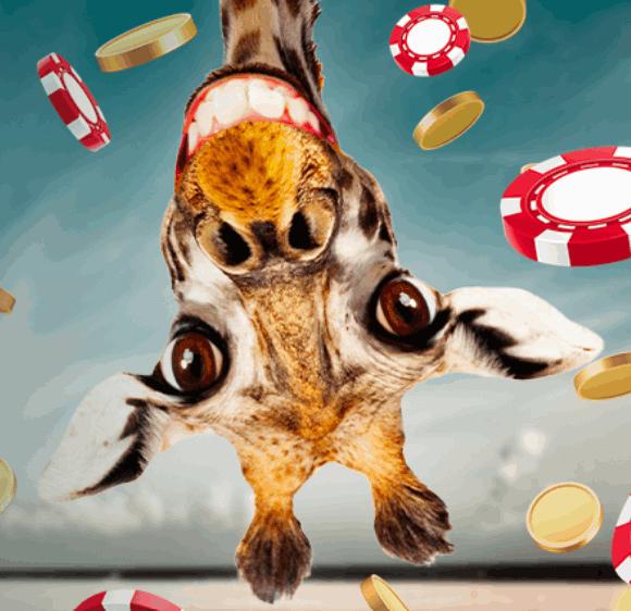 Skol casino giraff