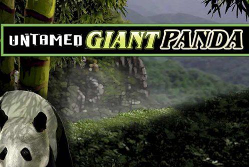 Untamed Giant Panda automat